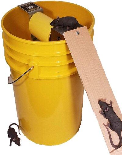 bucket mouse trap.jpg