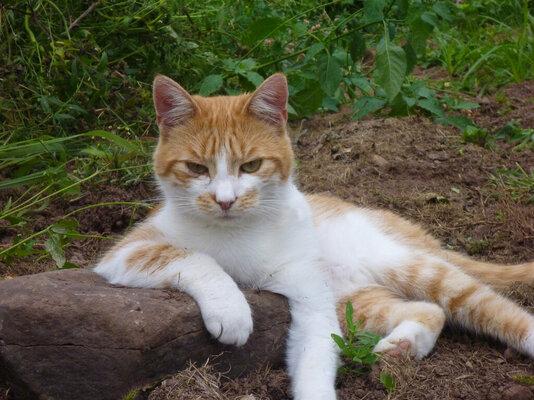 kittycat.jpg